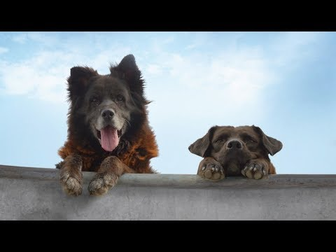 'Los Reyes' Review: Dreamy Dogs Upstage Chatty Skaters