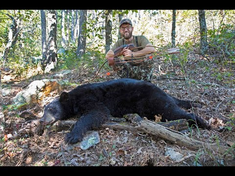 Oklahoma Black Bear With Traditional Archery - Public Land Off The Ground!