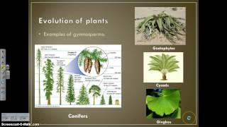 Kingdom Plantae Notes