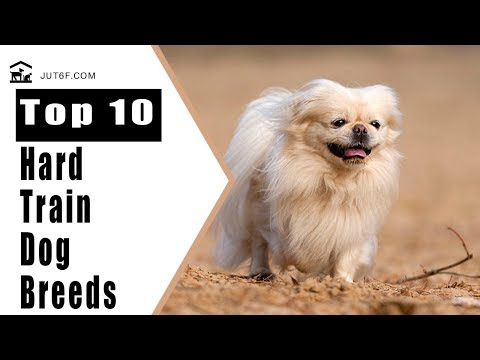 Top 10 Dog Breeds That Are Super Cute, But Notoriously Hard To Train