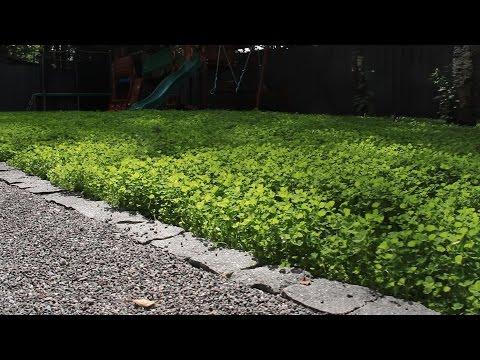Садовая дорожка | Процесс строительства