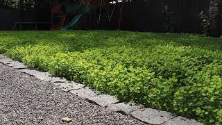 видео Садовые дорожки из брусчатки: строительство и оформление своими руками