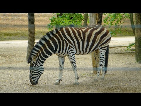 Meet The Animals at ZSL London Zoo | 4K Footage | 16 Aug 2017