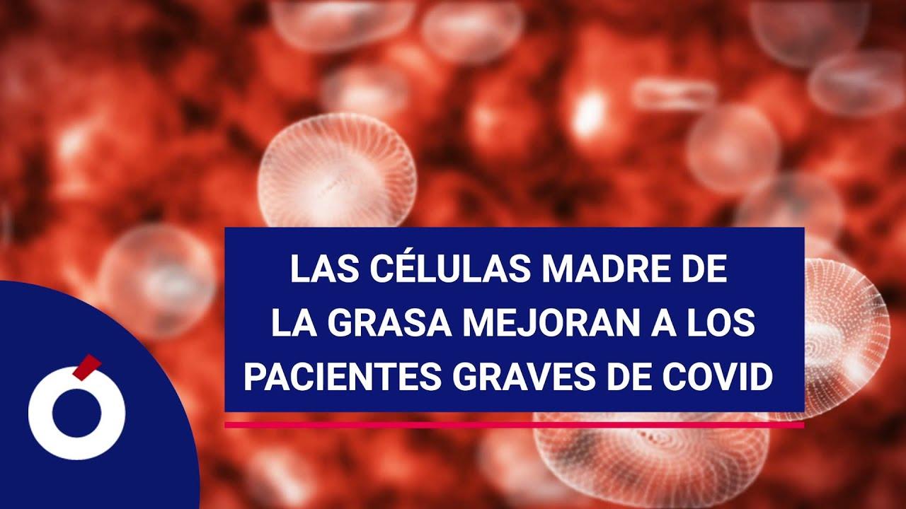 Las células madre de la grasa mejoran a los pacientes graves de Covid-19