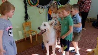 Собаки- спасатели в детском саду №44