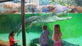 Зоопарк животных - крокодилы, медведи и некоторые другие дикие животные.