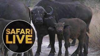safariLIVE - Sunrise Safari - July 19, 2018