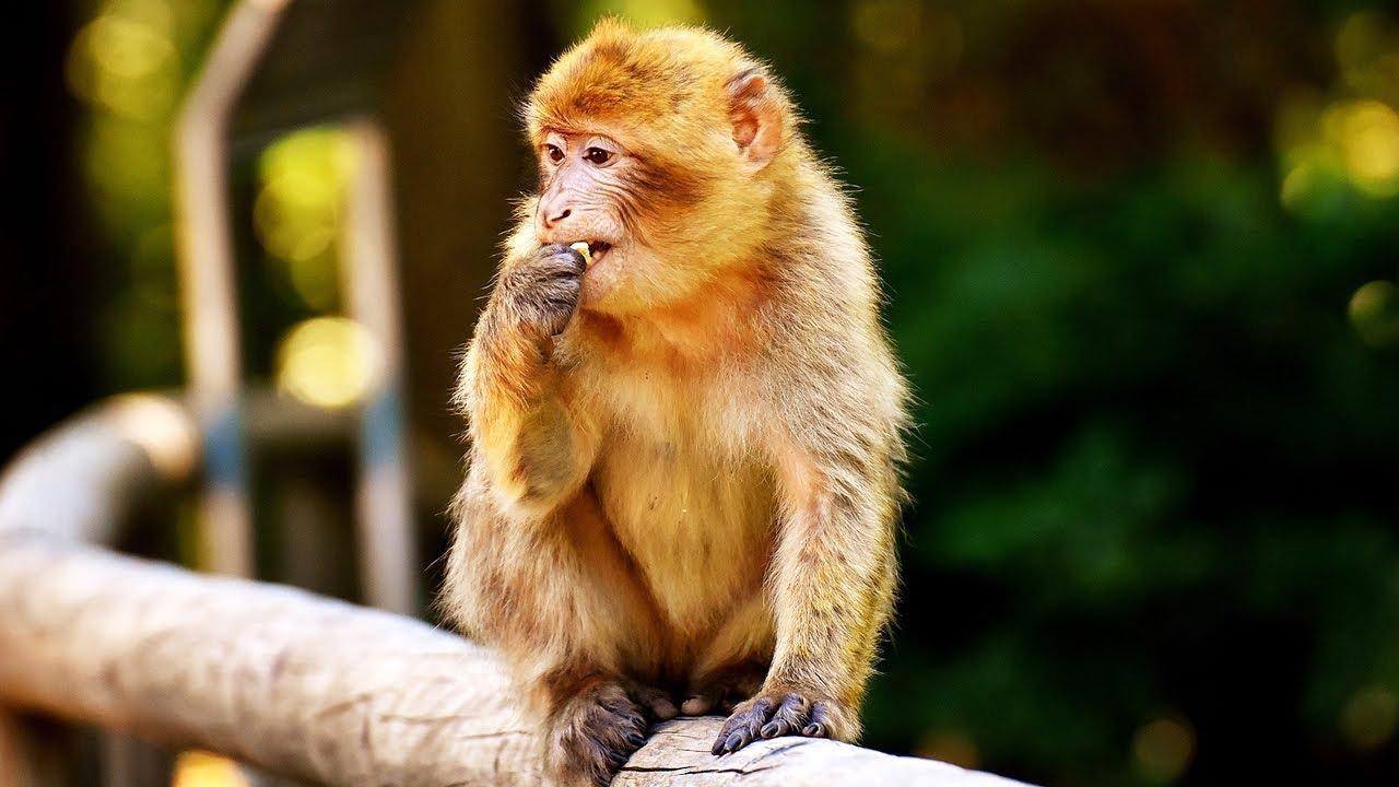 Ngộ nghĩnh đàn khỉ ở vườn bách thú Hà Nội