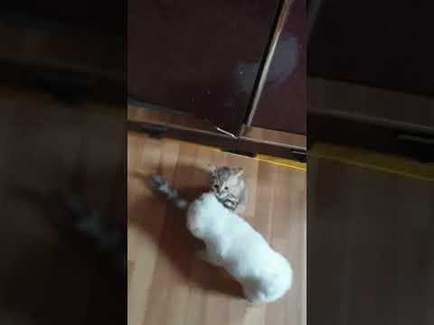 Моя собака Лайда играет с кошкой маня - YouTube