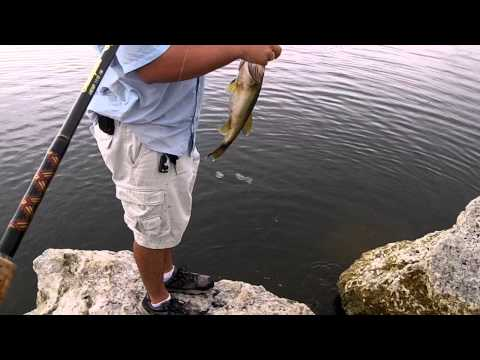 Bass Fishing Tamiami Trail