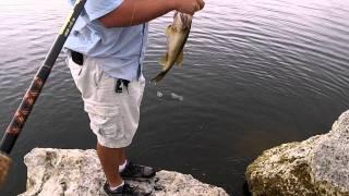 Bass Fishing Tamiami Trail