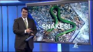 WSPA TV News Interviews Scaly Crew - Summer Snake Safety