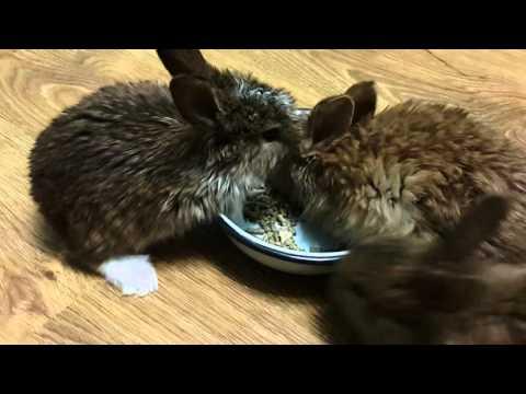 Как выкормить крольчат без крольчихи 14 дневном возрасте