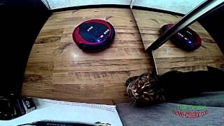 Робот пылесос попустил кота. Robot vacuum cleaner vs Cat