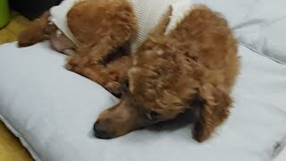 안락사 위기 강아지 입양방송