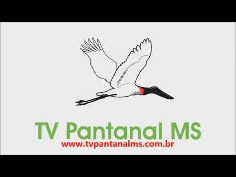 Programa PAULO MANSANO ENTREVISTA (piloto)
