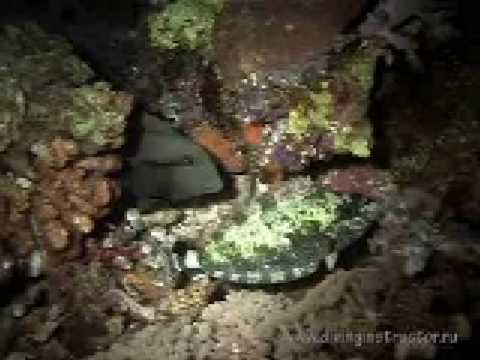 reef tubataha 13