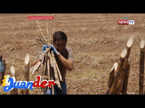iJuander: Pinakamatandang sugar mill sa Negros Occidental, silipin!