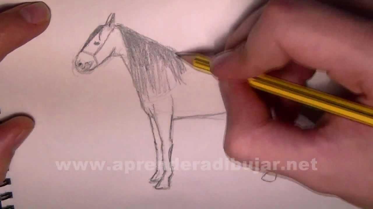 Pferd Zeichnung Online Zeichnen Lernen Youtube