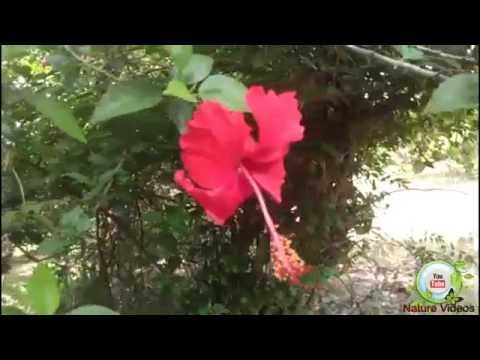 Flowers nature video