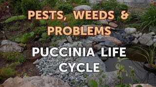 Puccinia Life Cycle