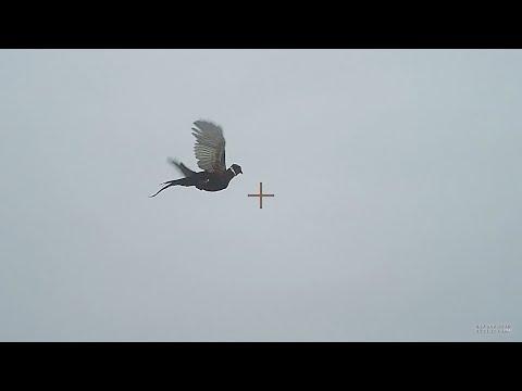 Preserve Pheasant Hunt 01-31-2020