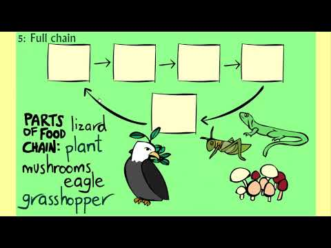 The Food Chain Game - Learn About Science And Animals - Sheppard Software