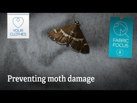 Fabric focus: how to prevent moth damage naturally