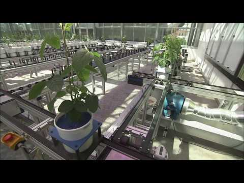 Nebraska Plant Phenotyping: Nebraska Innovation Campus Greenhouse