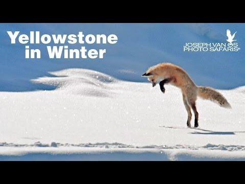 Yellowstone in Winter Photo Tour