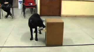 Canine Cognition-will Dogs Be Able To Imitate A Task After Observing Another Dog?
