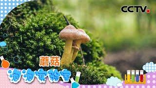 [智慧树]泡泡实验室:蘑菇|CCTV少儿
