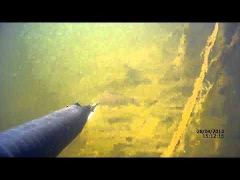 фон подводная охота
