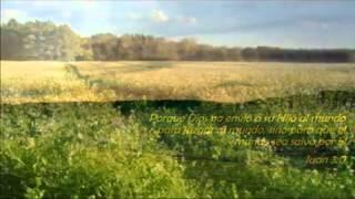 Jonathan Oriel  - La viña