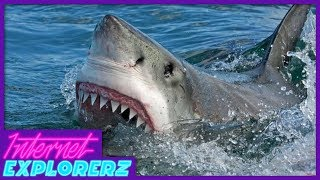 This is Why You Don't Swim with Sharks! - Internet Explorerz