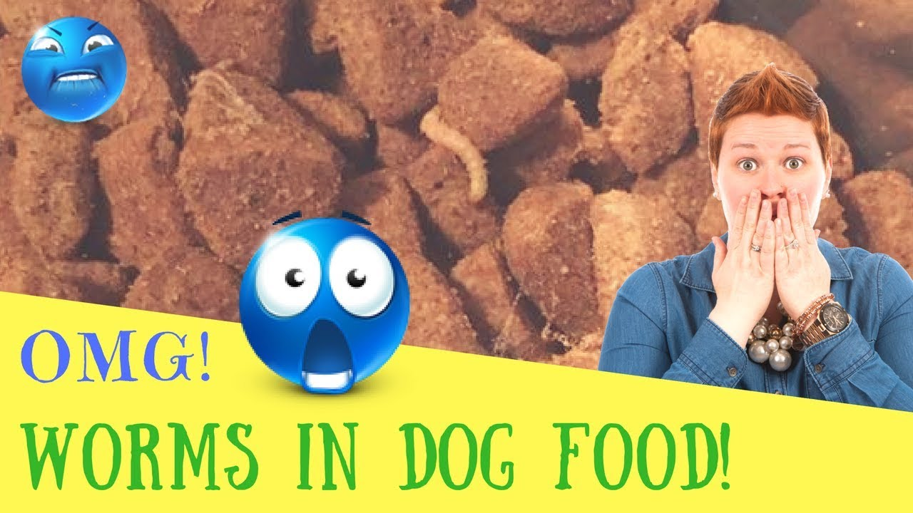 Omg Worms In Dog Food Youtube