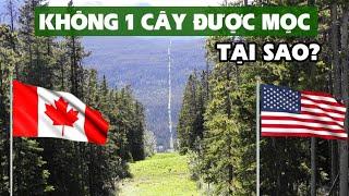 Biên giới Mỹ - Canada: Cây không được phép mọc!