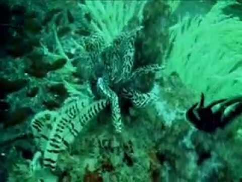 Amazing UAE Dive