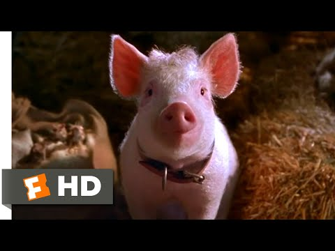 Babe: Pig In The City (1998) - That'll Do, Pig Scene (10/10) | Movieclips
