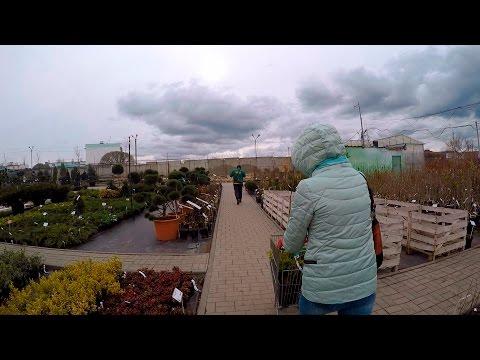 Поездка в питомник садовых растений