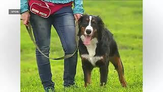 Каких собак запрещено выгуливать без намордника и поводка