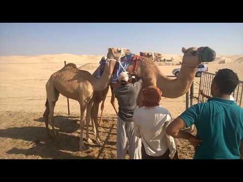 Camel shopping