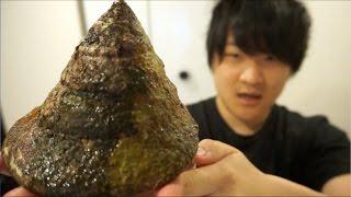 ボタンの原料!!最強の貝、タカセ貝をさばく!! thumbnail