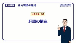 【生物基礎】 体内環境の維持24 肝臓の構造 (14分)