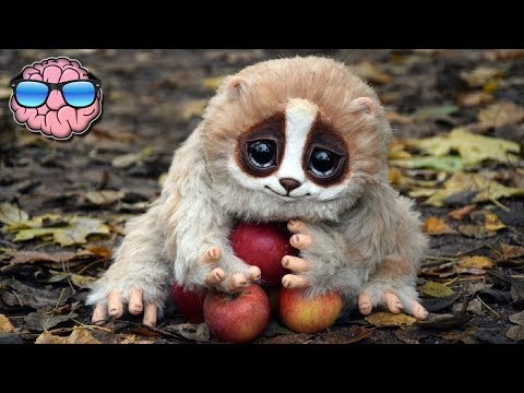 10 CUTE Animals That Can KILL You