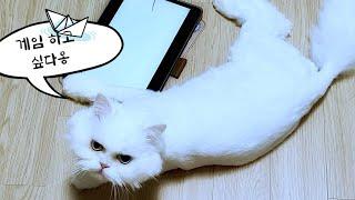 [고양이가좋아하는영상] cat's favorit…