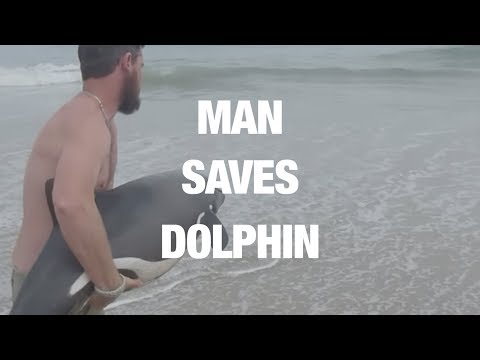 Incredible Rescue of Young Dolphin Caught on Camera (Storyful, Inspiring)