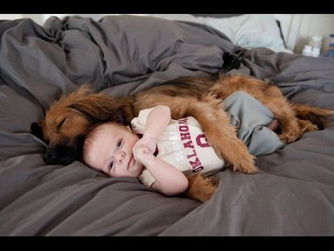 Dogs Who Proved To Be Perfect Friends For Kids
