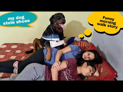 Funniest morning walk story||funny dog videos||rottweiler dog.