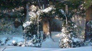 Winterstorm Jonas - Blizzard of 2016